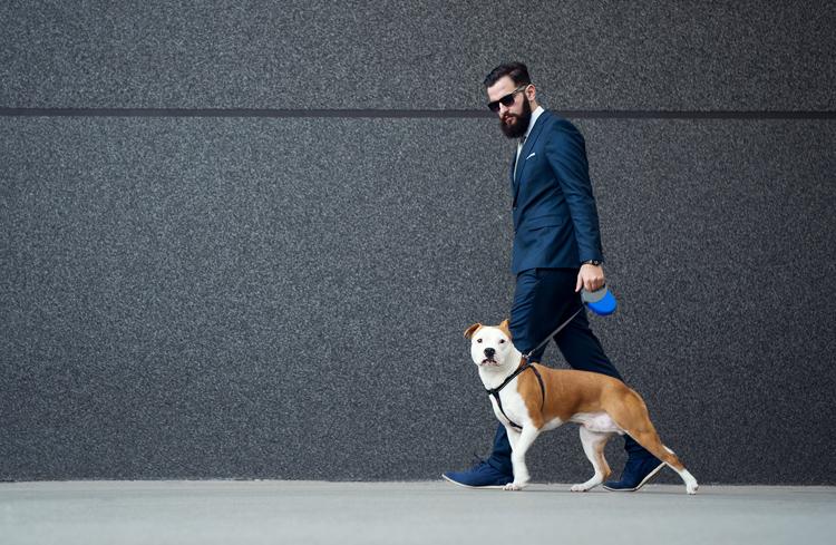 man walking dog after limo trip